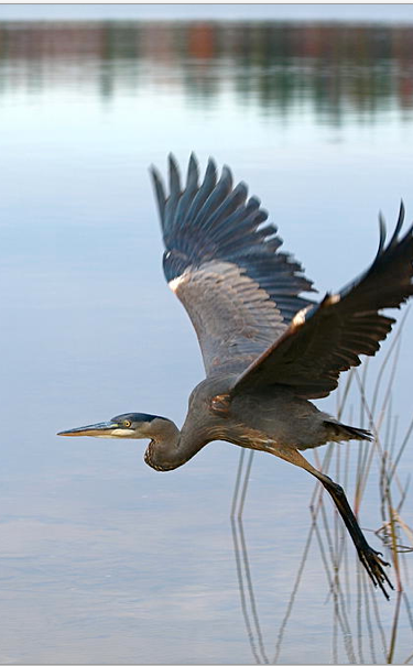 Project NatureConnect Heron